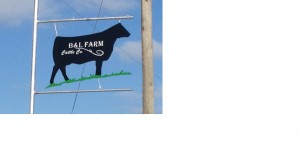 B & L Farm Cattle Co.